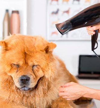 peluqueria canina otxoki