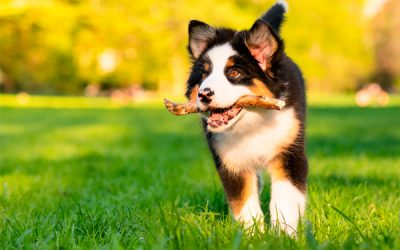 Controla la ansiedad y el miedo de tu perro