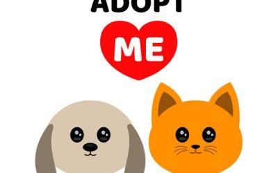 ¿Adoptar un perro o un gato en Navidad?